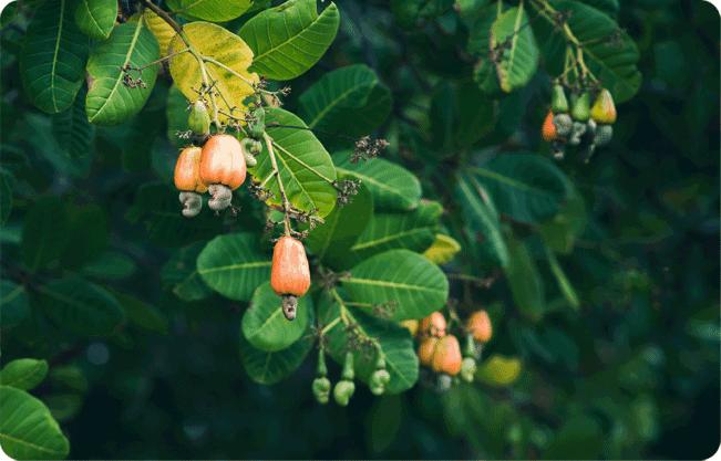 Process organic farming